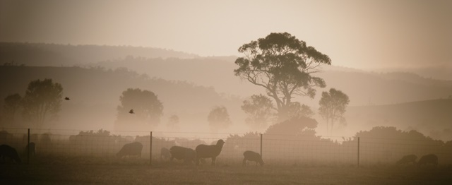 Tasmanian Farm Biosecurity
