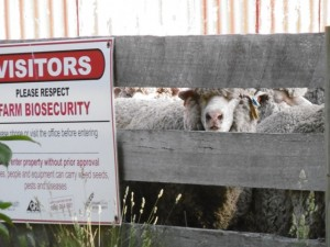 Farm biosecurity