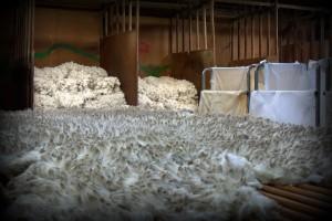 Australian Wool, Superfine Merino Fleece