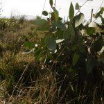 Landcare regeneration